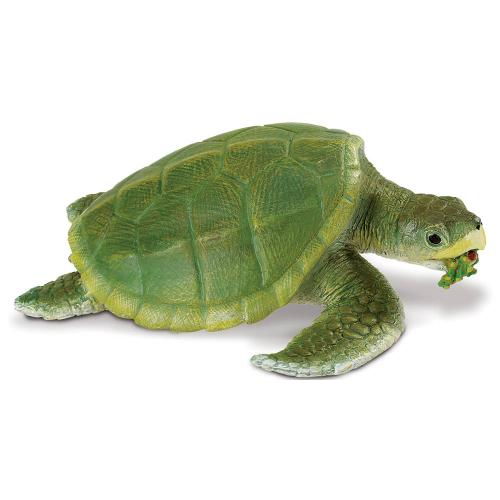 262429-safari-incredible-creatures-kemps-ridley-sea-turtle-1