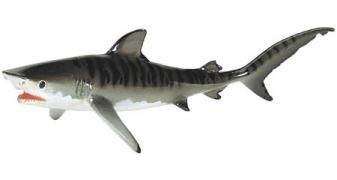 Monterey Bay Collection Tigerhai